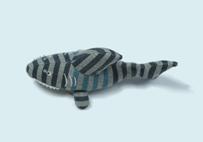 Shark Baby's Toy